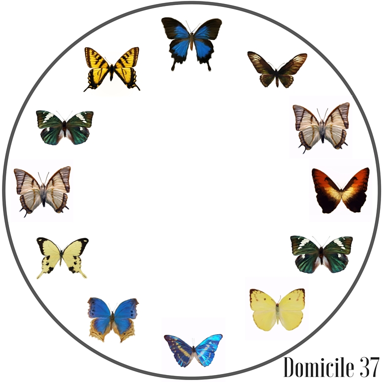 Butterfly Entomology clock printable created using Graphic stock images