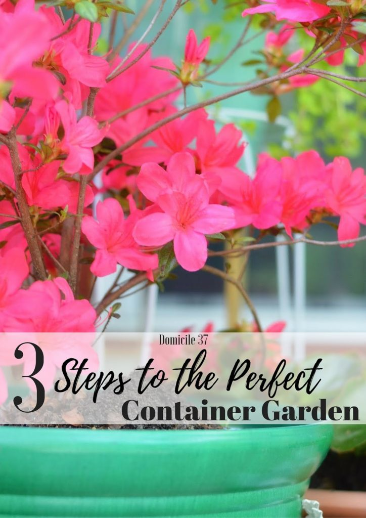 How to create a container garden with 3 steps, Big Lots, garden pots, Container garden DIY, 3 step garden tutorial, azalea, begonia, creeping jenny plants
